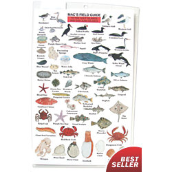 MACS FIELD GUIDE NW COASTAL FISH