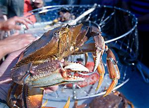 Crabbing Season is Open!